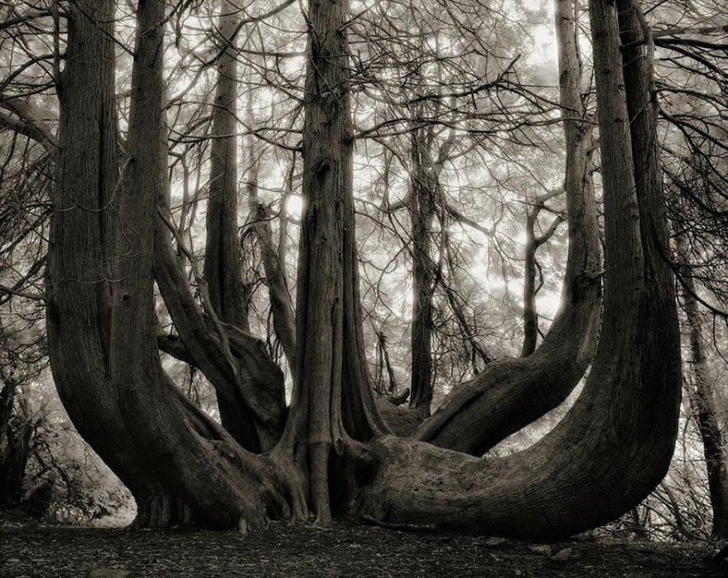 14 лет поисков самых древних деревьев-14