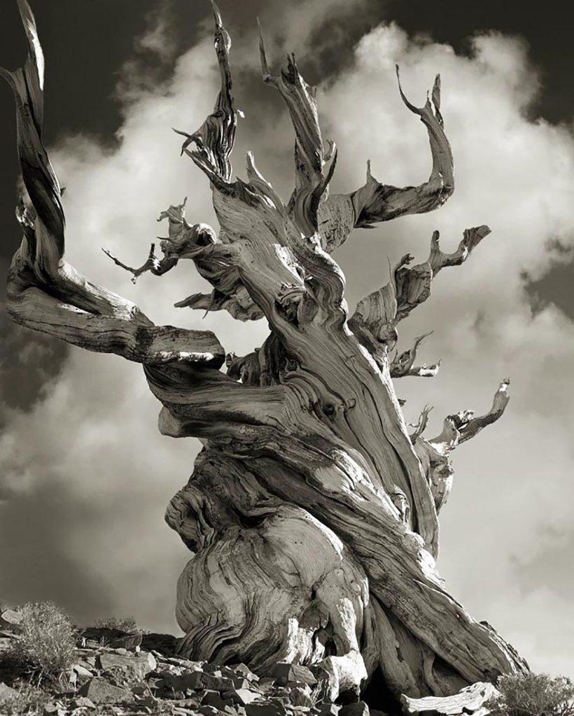 14 лет поисков самых древних деревьев-15