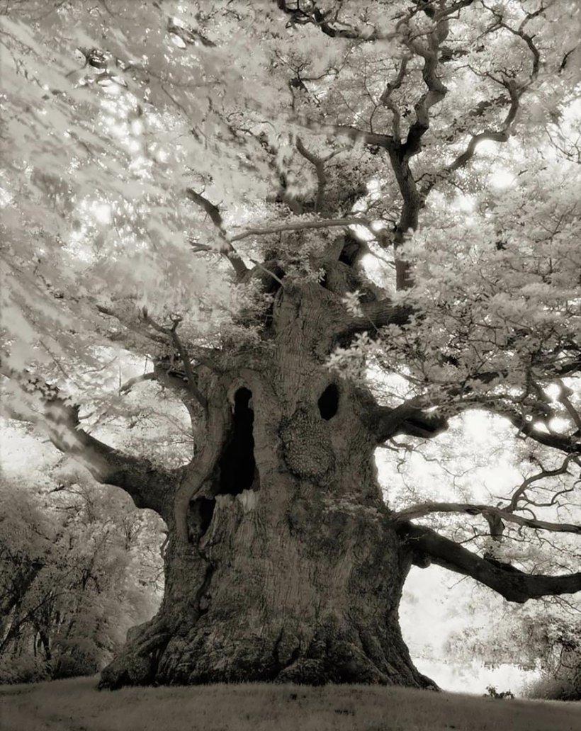 14 лет поисков самых древних деревьев-16