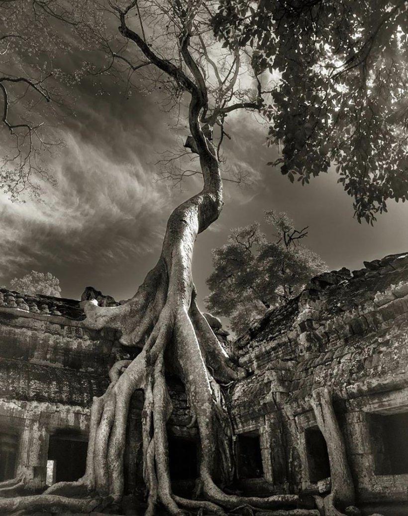 14 лет поисков самых древних деревьев-17