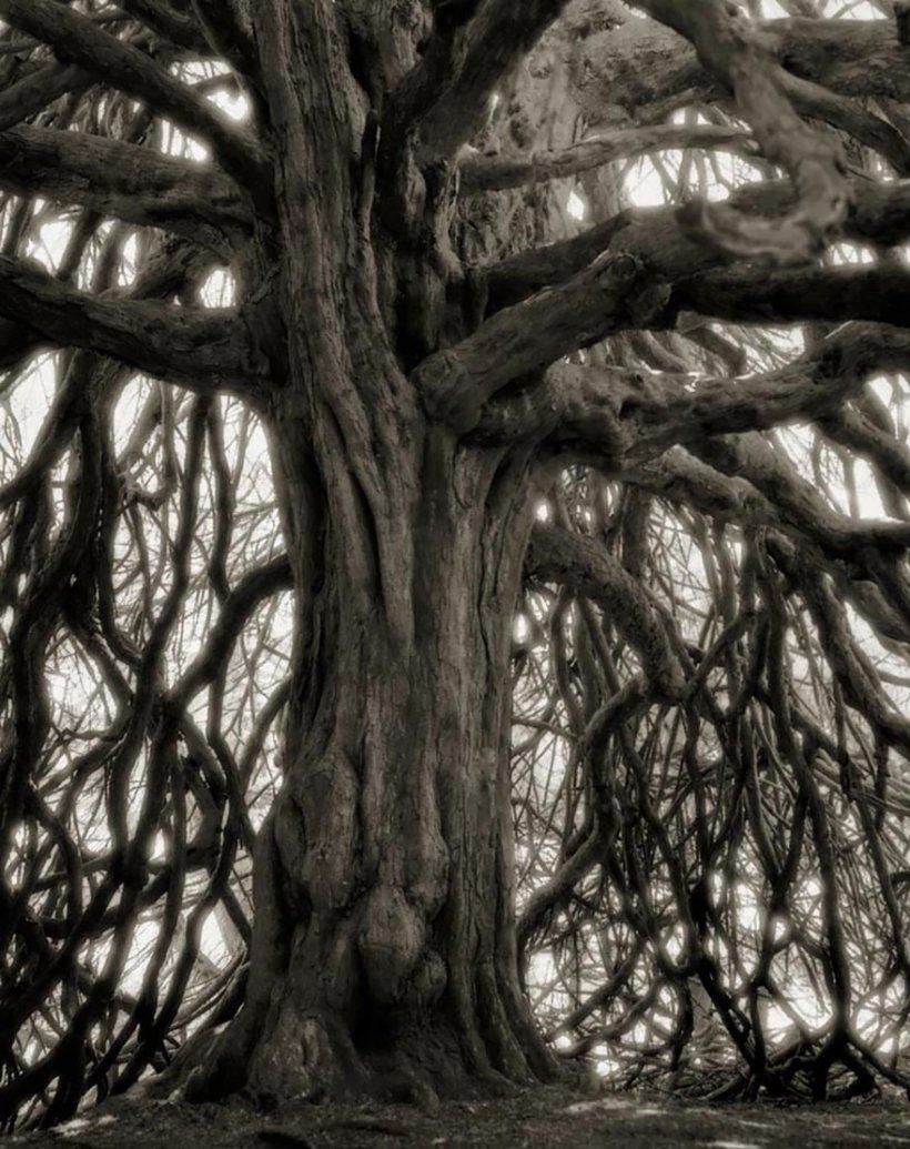 14 лет поисков самых древних деревьев-18