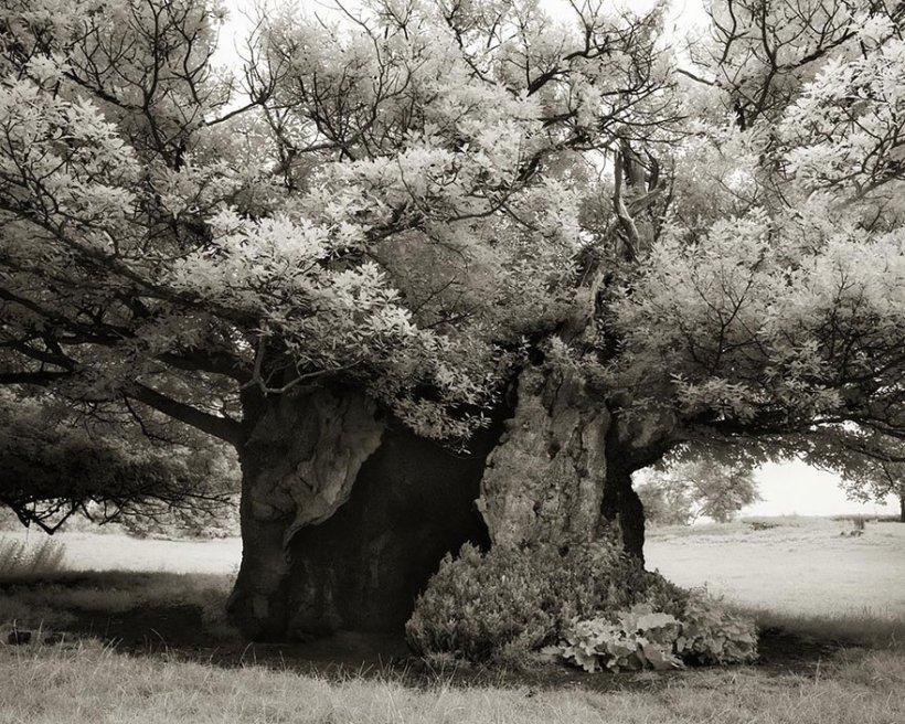 14 лет поисков самых древних деревьев-19