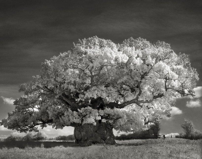14 лет поисков самых древних деревьев-2