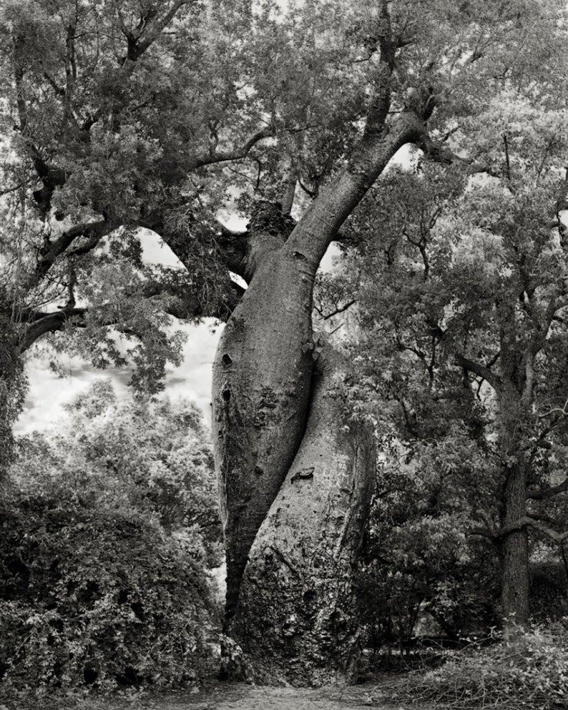 14 лет поисков самых древних деревьев-20