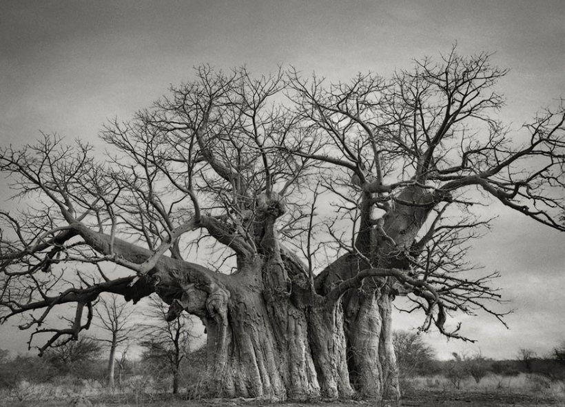 14 лет поисков самых древних деревьев-3
