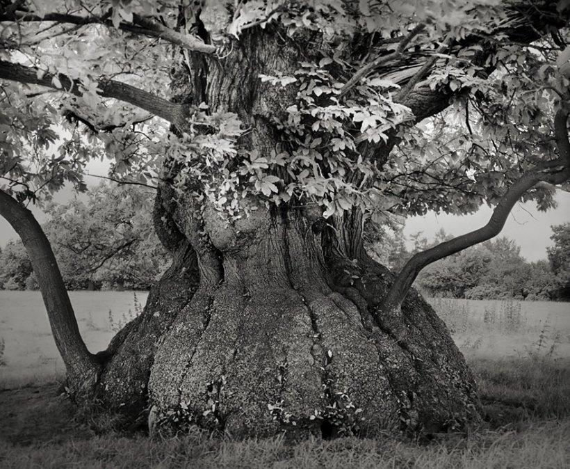 14 лет поисков самых древних деревьев-4
