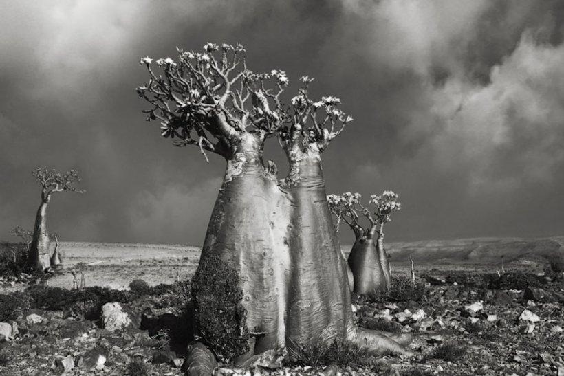 14 лет поисков самых древних деревьев-5