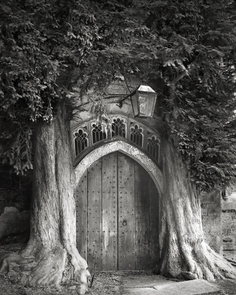 14 лет поисков самых древних деревьев-6
