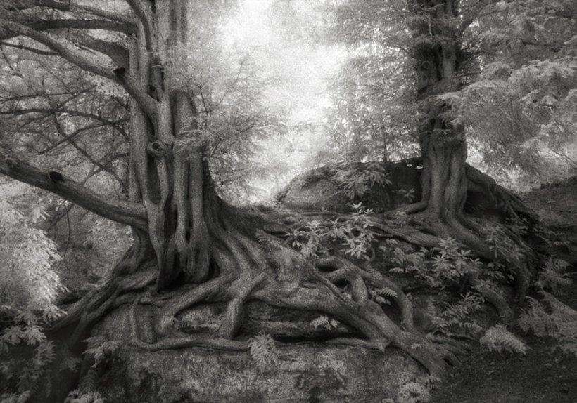 14 лет поисков самых древних деревьев-7