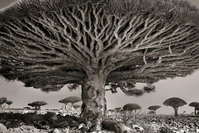 14 лет поисков самых древних деревьев-8