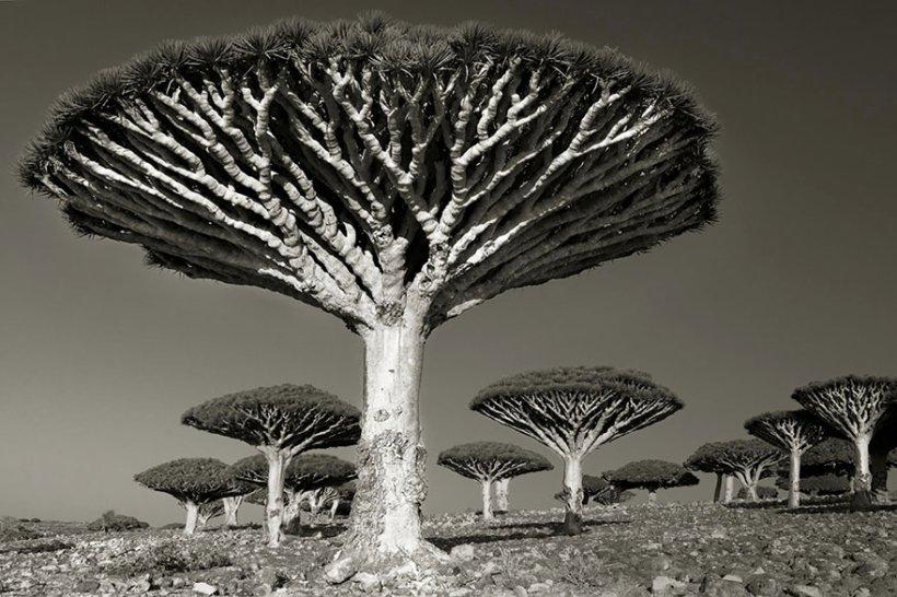 14 лет поисков самых древних деревьев-9