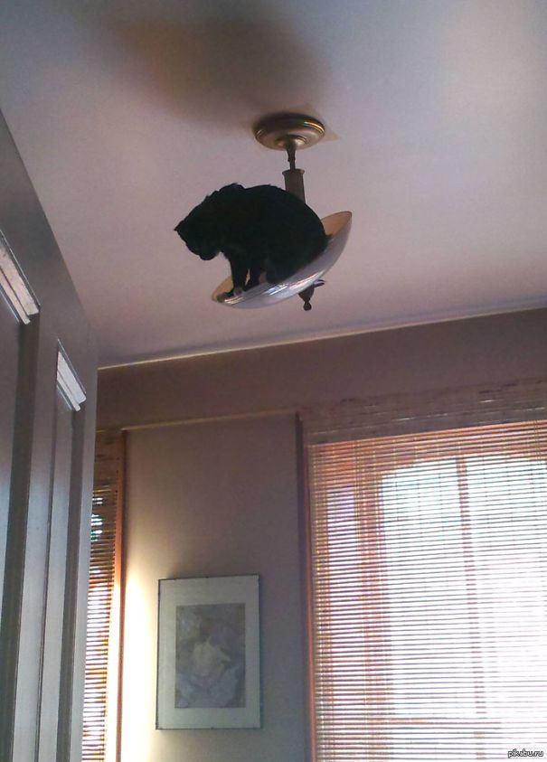 ninja-cat-hiding-funny-43__605