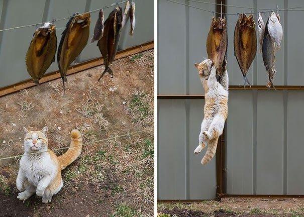 ninja-cat-hiding-funny-4__605