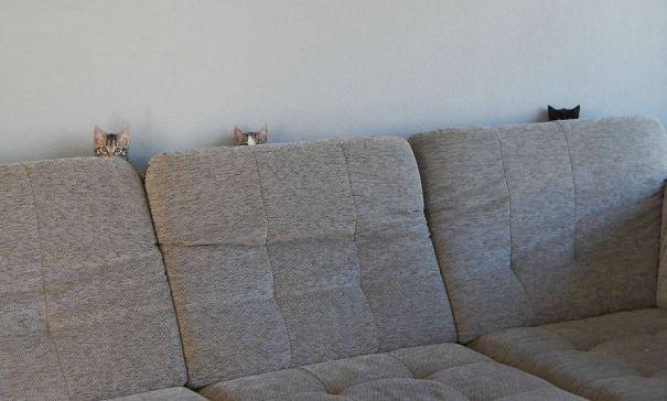 ninja-cat-hiding-funny-53__605