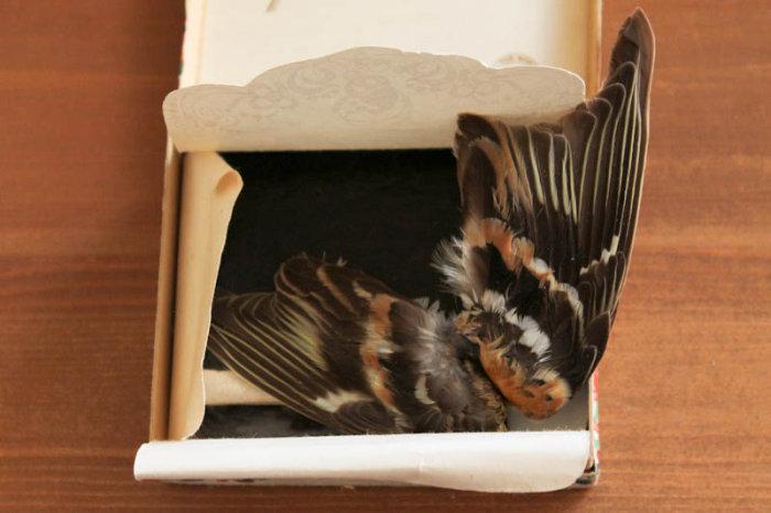 Бесценные детские сокровища, пролежавшие в коробочке долгие годы (28 фото)