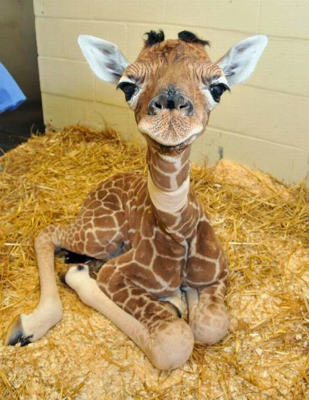23 Mind-Blowing Animal Pictures