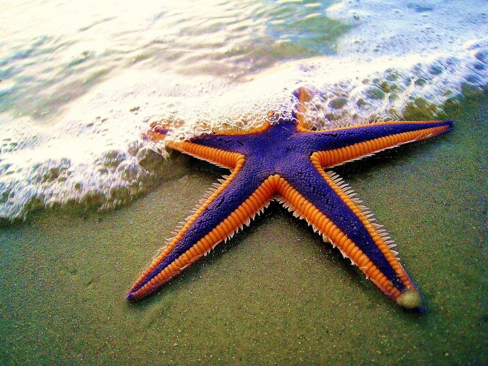 Фото Присоски морской звезды