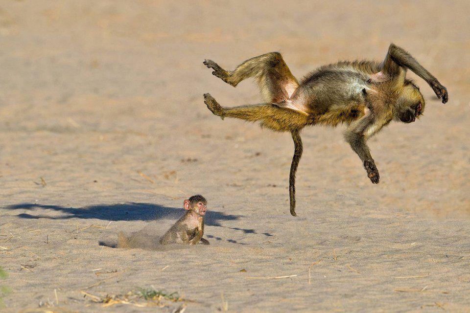 фотоконкурс забавных животных