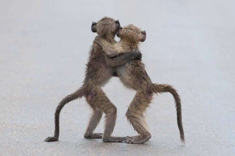 «Последнее танго». Фото: Tony Dilger.