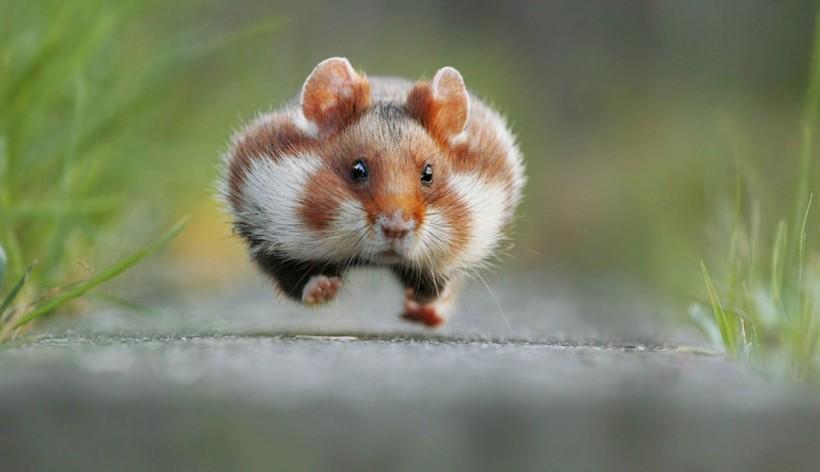 «Спринтер». Фото: Julian Rad.