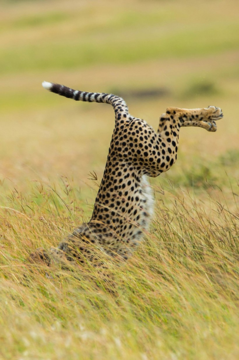 Запатентованный тип охоты. Фото: Mohammed Alnaser.