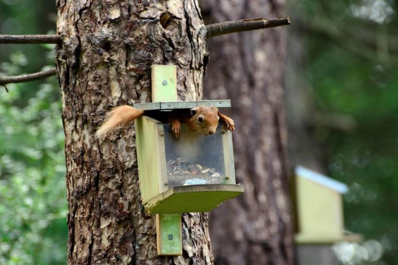 «Тут нет орехов!». Фото: John Brown.