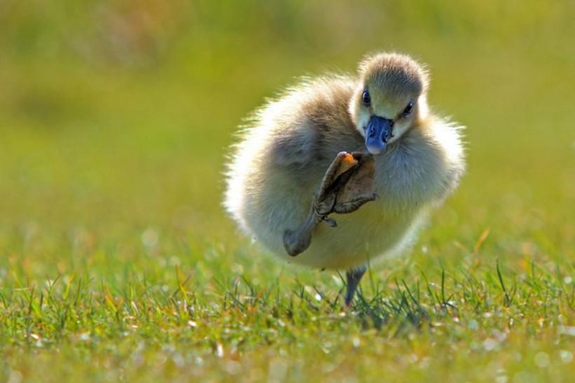 «Широко шагая». Фото: Eric Gessmann.