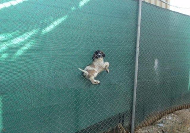 Собаки, со своими неудачами (26 фото)