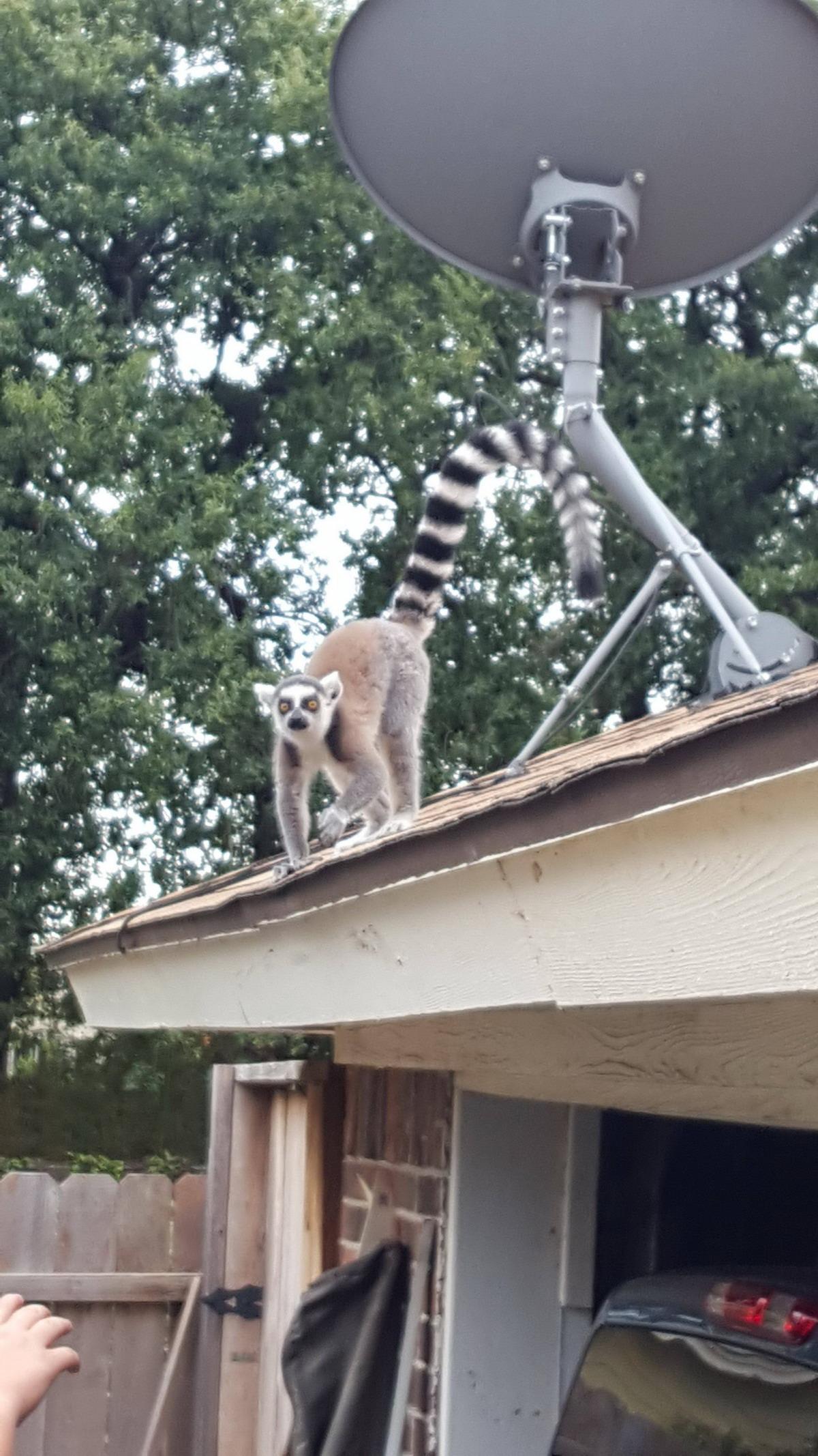 Позитивные и милые животные