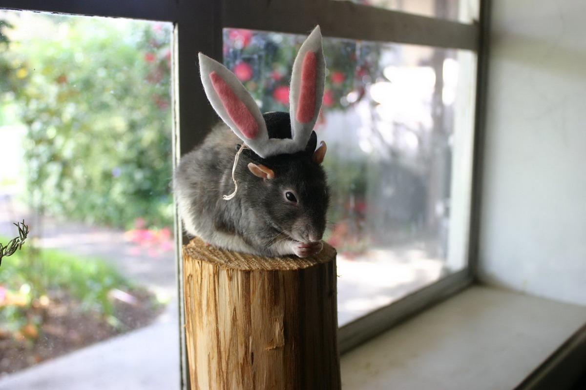 милые, забавные животные