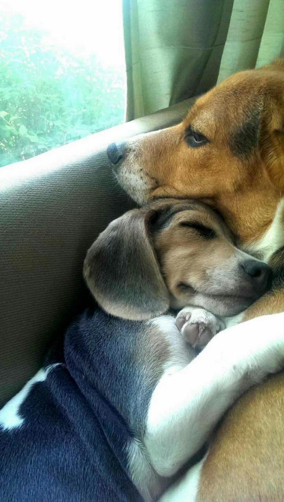 Самые позитивныеи милые животные