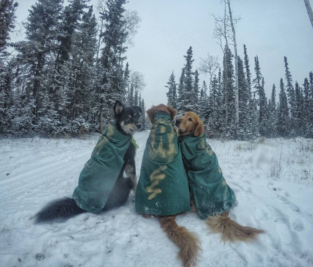 Стоматолог Тим, со своими собаками (20 ФОТО)