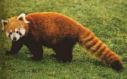 Сотня, самых редких, загадочных и мистических животных !