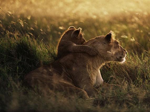 14. С такой мамой можно смело смотреть в будущее.
