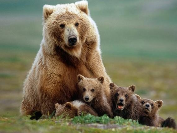 21. У медведей утренняя зарядка включает в себя пробежку…