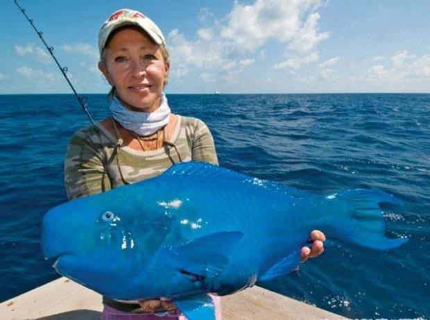 Необычная голубая рыба — попугай