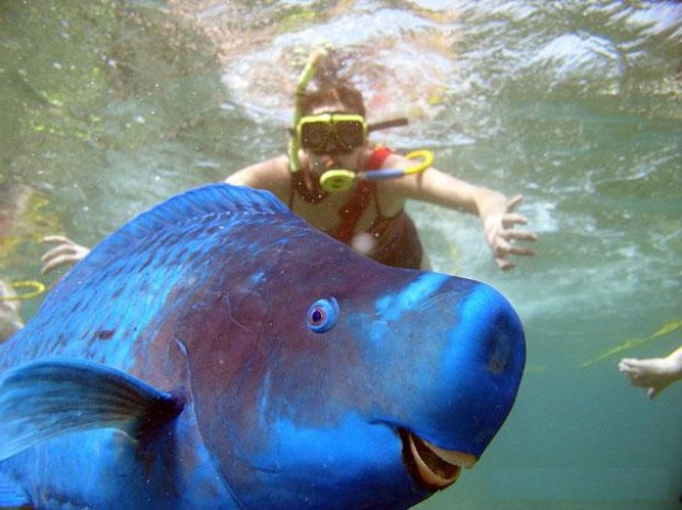 Необычная голубая рыба