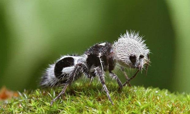 Необычный муравей