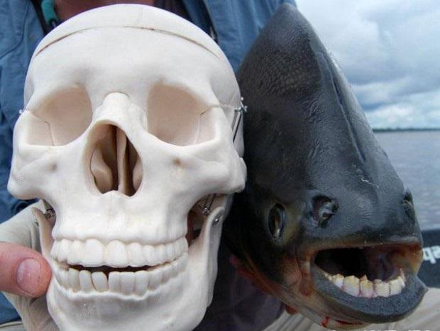 Необычная рыба фото