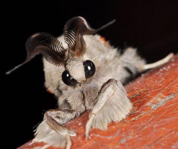 Необычное насекомое