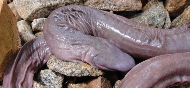 Необычная змея фото