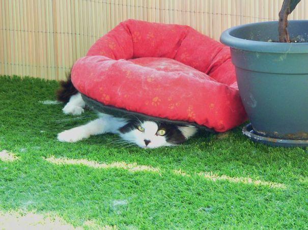Коты, у которых совершенно отсутствует логика, или она совершенно феноменальна!
