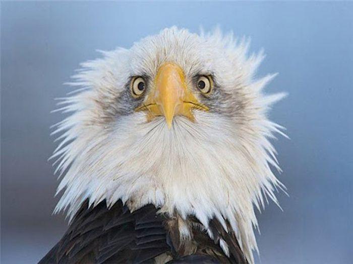 Почему орлов на гербах чаще всего изображают в профиль ? (2 фото)