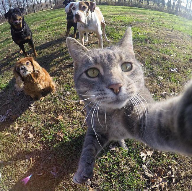 Знает толк в селфи кот, по имени <Мэнни> (8 фото)