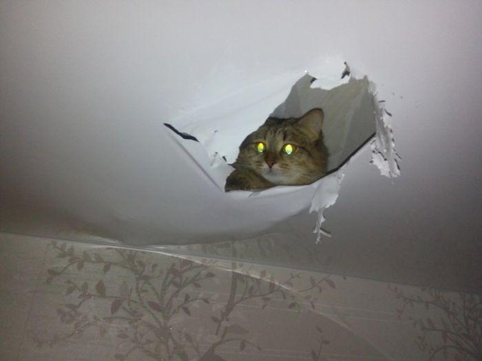 Киска изготовила для себя «норку» в потолке (2 фото)