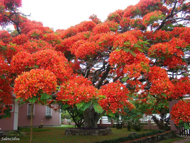 (酷图天地)世界上最美丽的树(17张) - 清风细雨 - 清风细雨