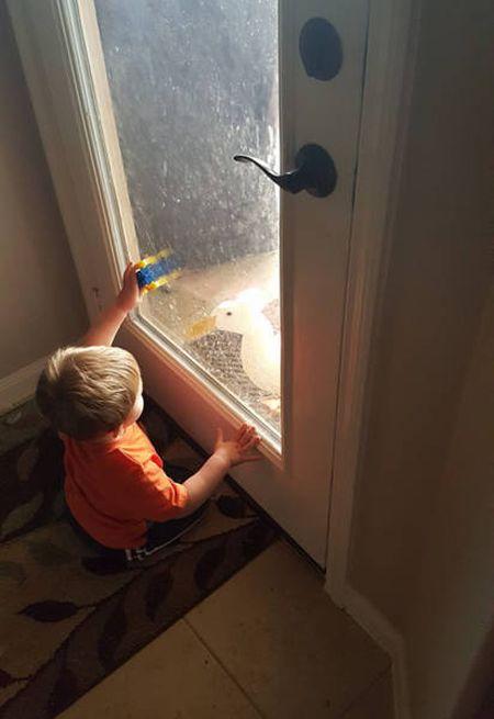 Утенок, лучший друг маленького мальчика (13 фото)