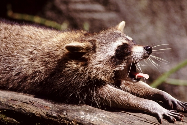 Новая и интересная подборка милых и забавных фотографий животных.