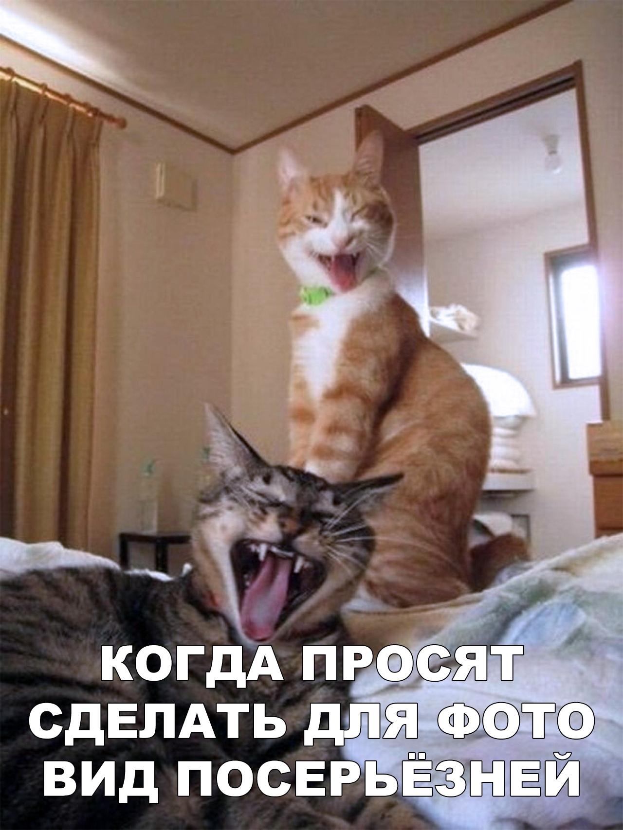 Самые смешные и забавные картинки. часть 536 ( 81 фото )