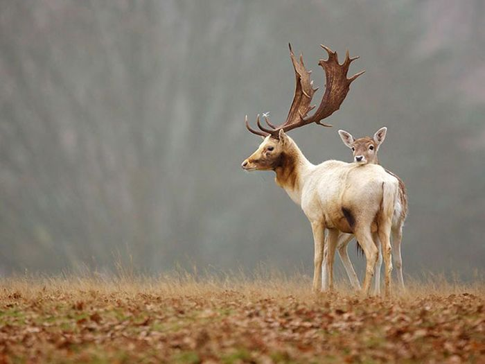 Красивые фотографии животных (40 фото)